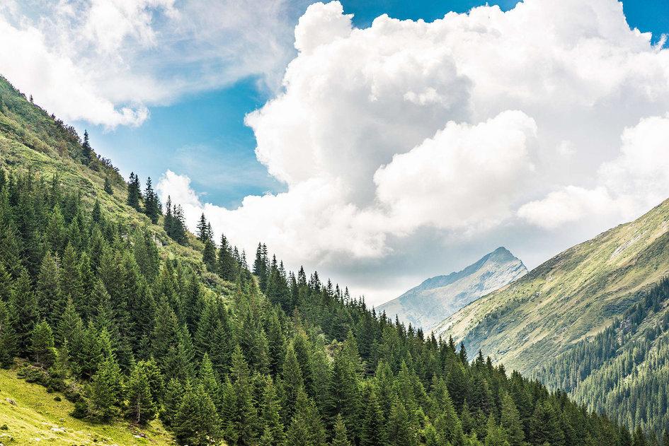 Concurs de proiecte 2020 - Protecția biodiversității forestiere